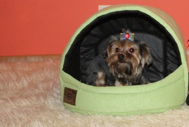 lettiera casa per cane gatto york shih tzu 2 menta ebay. Black Bedroom Furniture Sets. Home Design Ideas